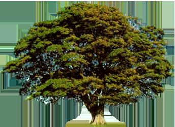 environmentlarge