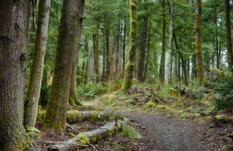 hiking-trail-cm
