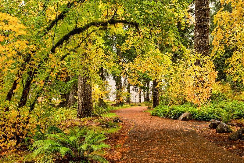 A-path-through-autumn-foliage-forest-in-Silver-Falls-State-Park,-Oregon,-USA-cm