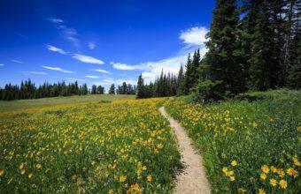 Wildflower-Path-at-Cedar-Breaks-cm
