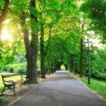 Sunrise-In-a-Green-Park-cm