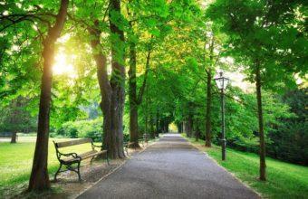 Sunrise-In-a-Green-Park-cm
