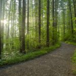 Footpath in a dense forest on a sunny day-cm