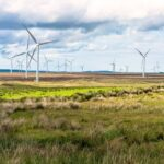 Wind turbines are not a birds best friend-cm