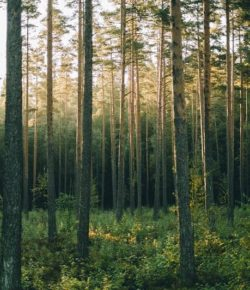 Comments on the Elliott State Research Forest proposal-cm